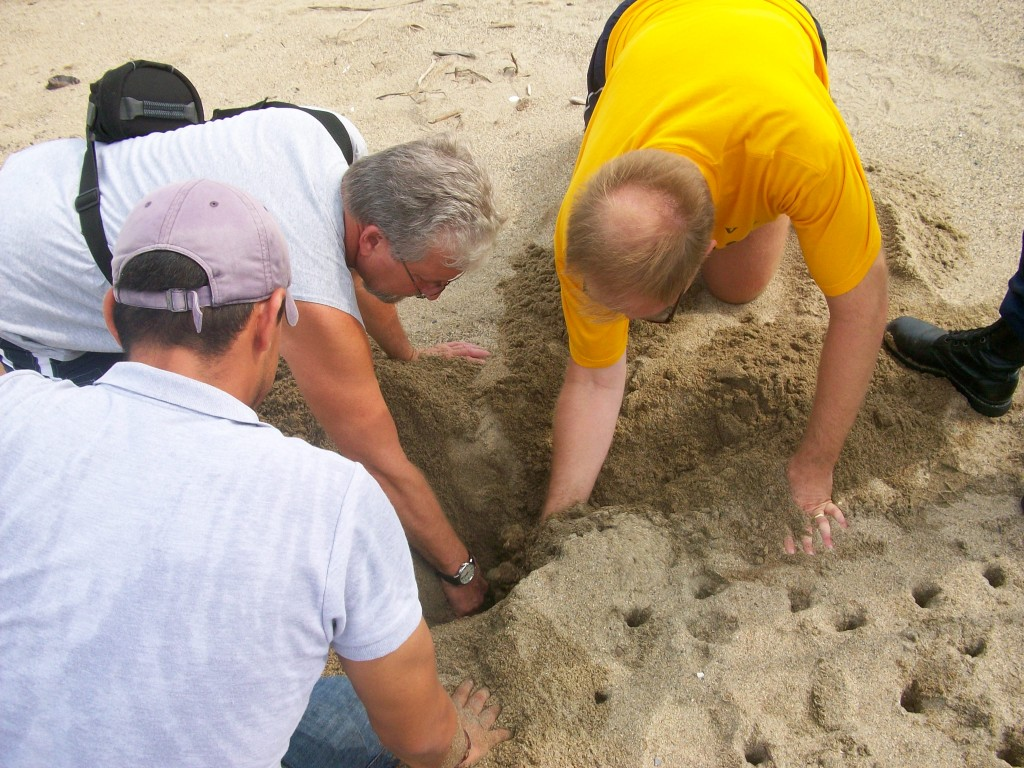 Finding turtle eggs